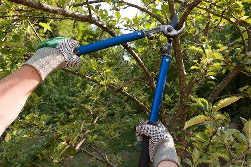 ants treeworks tree pruning tree mulching be safe