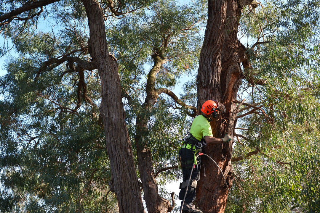 ants treeworks tree removal narre warren feature