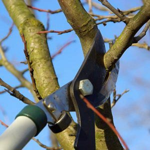 ants treeworks tree removal pruning service