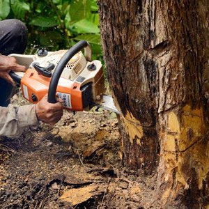 ants treeworks tree removal service
