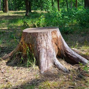 ants treeworks tree removal stump grinding service