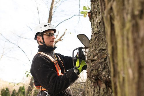 ants treeworks tree removal worry free