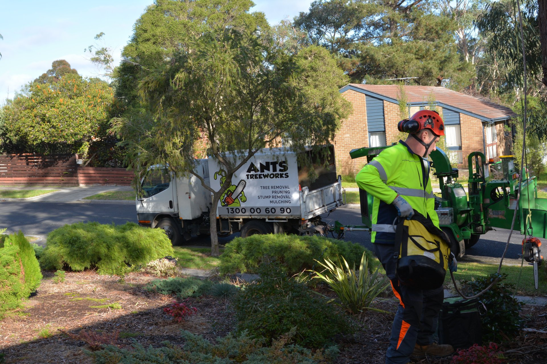 ants treeworks tree removal box hill services