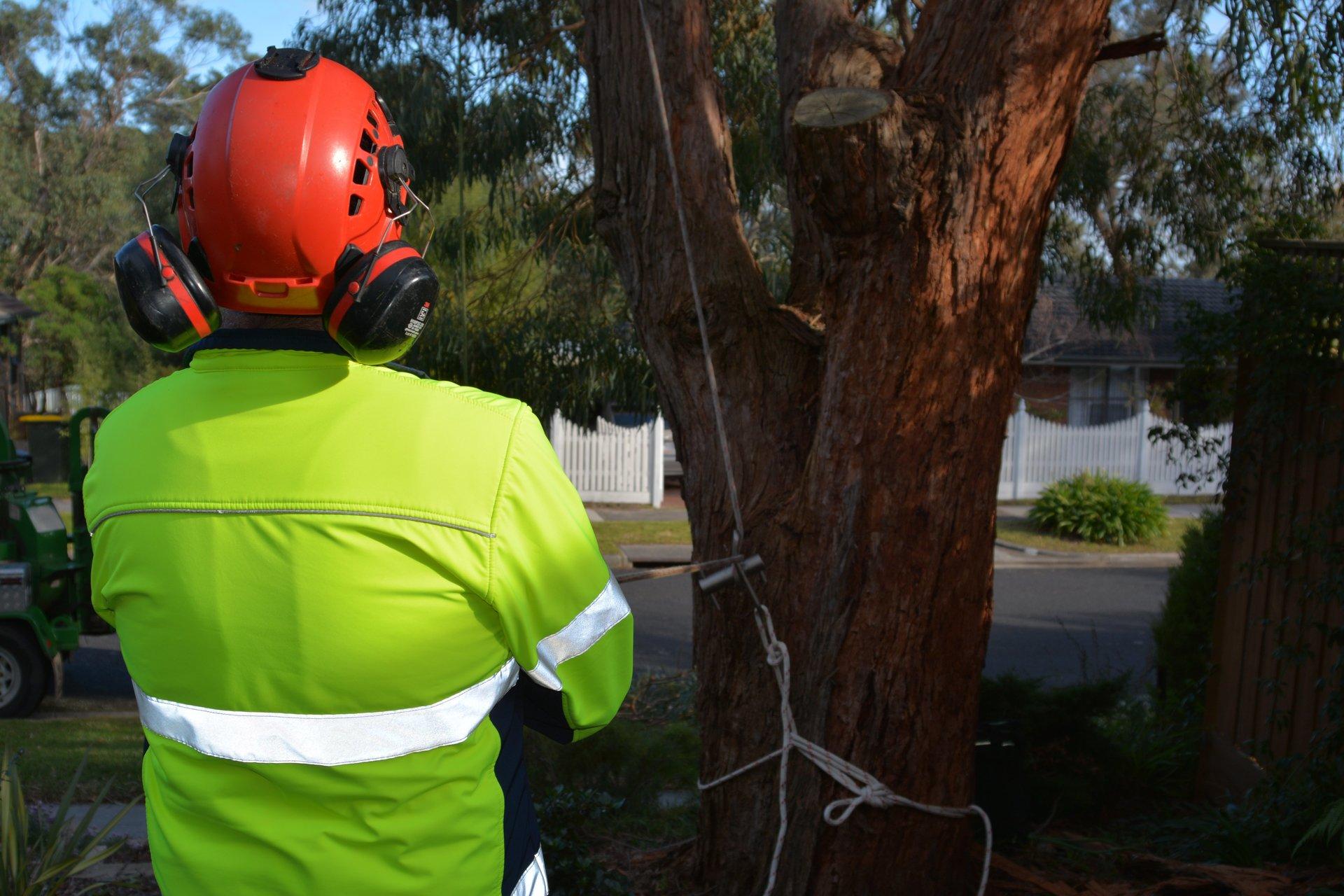 ants treeworks tree removal cheltenham info