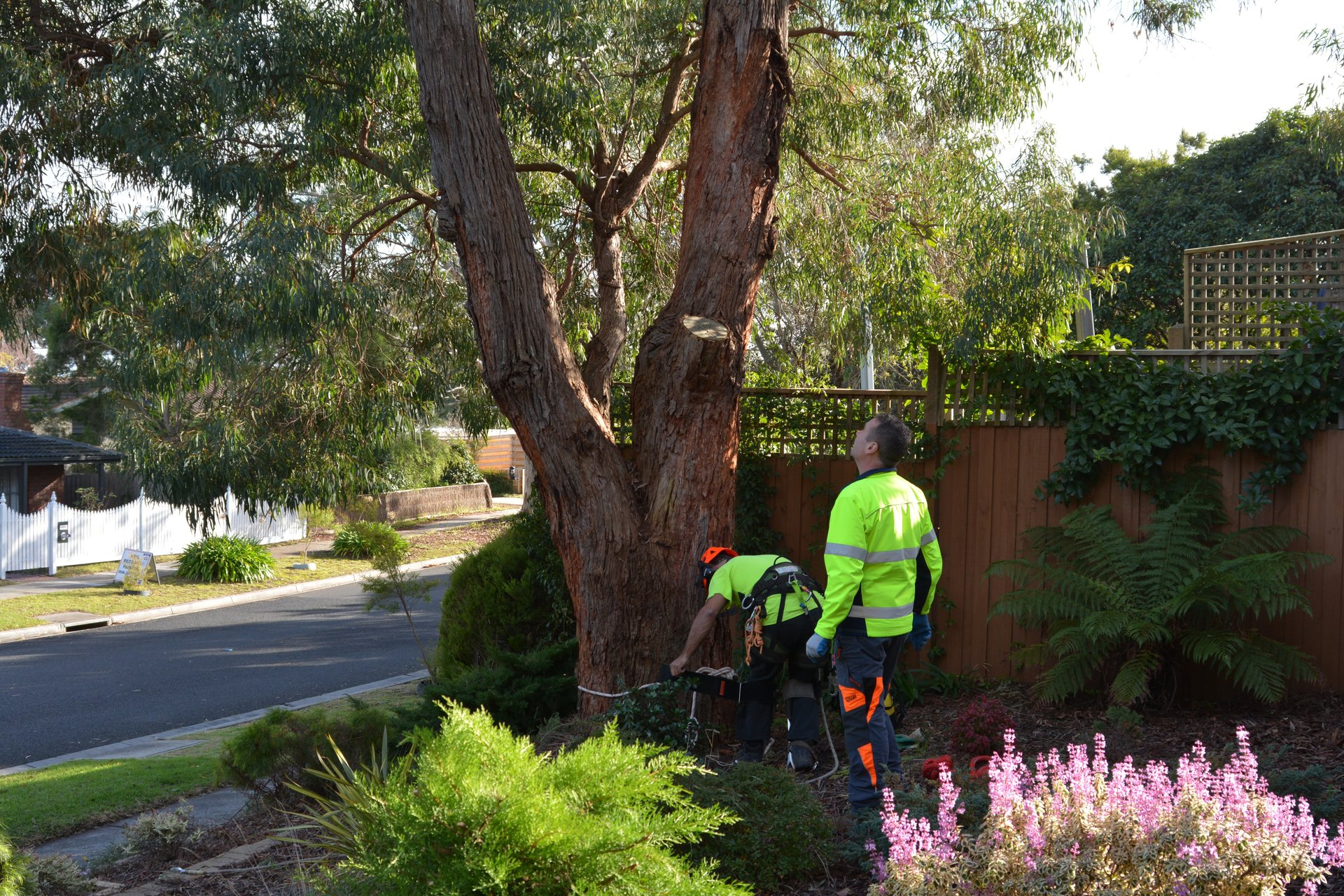 ants treeworks tree removal frankston about
