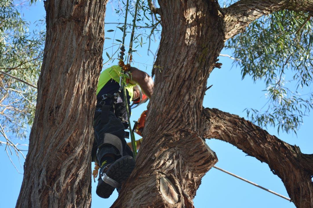 Tree Removal Brighton Antstreework